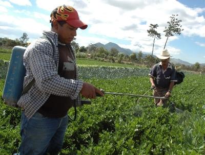 agricultores_fertilizantes