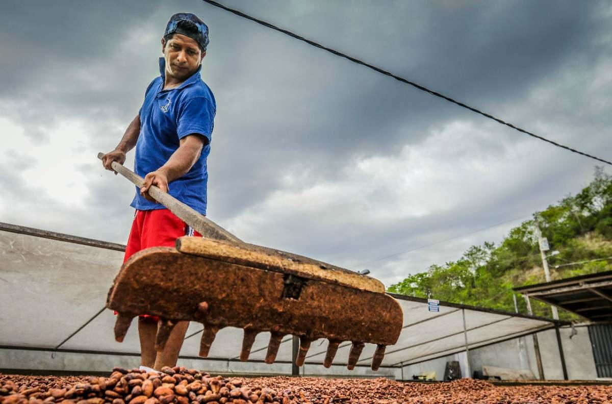 secado cacao pacari