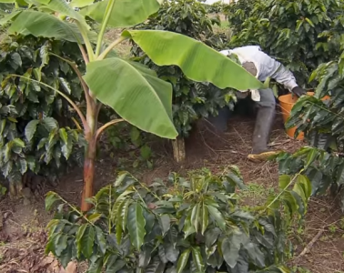 fertilización orgánica