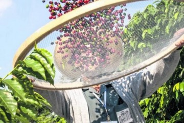 Buscan apoyar a 15 mil productores de café