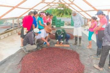 Cacao de Nuevo Progreso solicitado por Australia, Italia y Suiza
