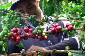 FNC aprobó importaciones de café para maximizar rentabilidad de productores