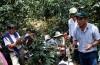 Curso Manejo tecnificado de renovación y rehabilitación de cafetales en Piura