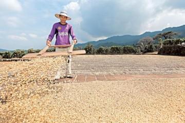 Qué está pasando en el mercado mundial de café y cómo afecta a El Salvador