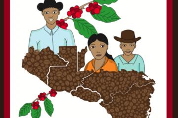 Buenas prácticas agrícolas en el cultivo del café
