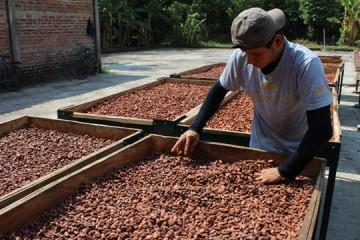 asesoria a productores de cacao