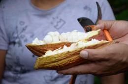 La pulpa de cacao un descubrimiento en beneficio de la salud
