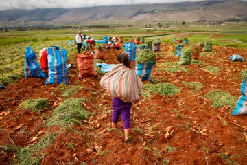 Productores agropecuarios solicitan medidas puntuales para la reactivación del sector agro