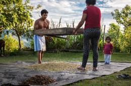 Convención Nacional de Café y Cacao reunirá a 200 líderes locales e internacionales