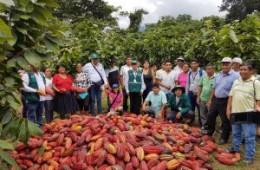 Familias del campo mantienen bajo control al mazorquero del cacao en Huánuco