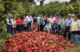 Productores de cacao de Huánuco controlan plaga que afecta cultivo