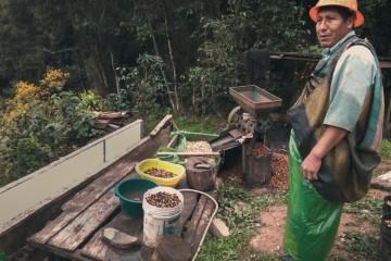 Puno: así se cultiva el Café Oro, producto que ha sido exportado a Rusia