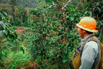 Puno: productores consolidaron su primera exportación de café a Rusia