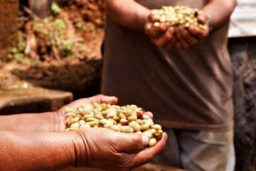 Caficultores reciben apoyo para ofrecer café de alta calidad