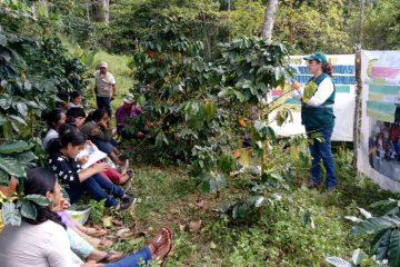 Capacitan a caficultores de Ucayali en manejo integrado de plagas