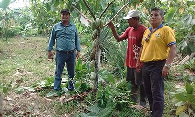 MINAGRI invertirá más de S/.4 millones en cultivos de cacao nativo de aroma en la región Loreto