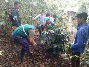 Caficultores de Junín fortalecen conocimiento para la producción de café