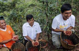 Más de S/ 1 millón inviertió MINAGRI en organizaciones de café y arroz en San Martín
