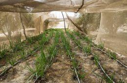 OCDE y FAO: La seguridad alimentaria requiere condiciones predecibles del comercio agrícola