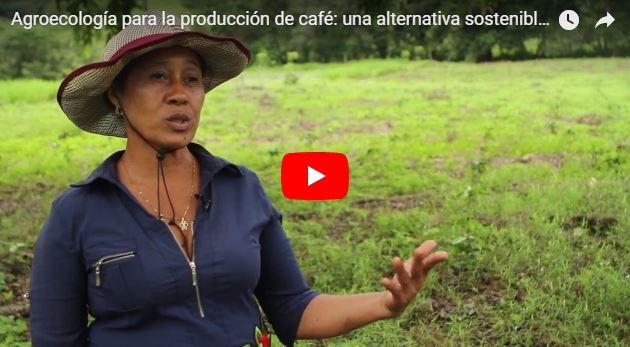 Agroecología para la producción de café: una alternativa sostenible para la agricultura familiar
