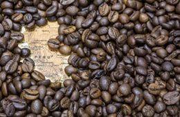Día del Café Peruano: así se cultiva y procesa el café de alta calidad