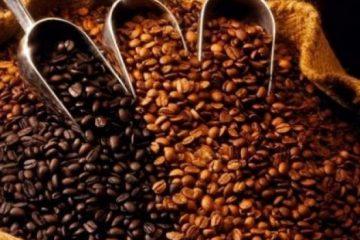 Producción de café sería afectada por falta de inversiones para abonamiento